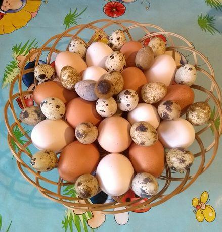 Домашни яйца от кокошки