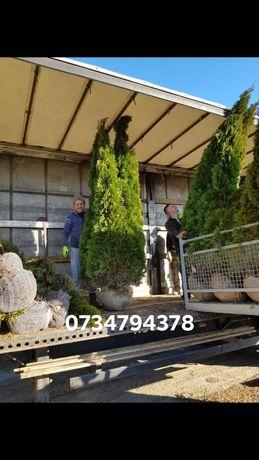 Va oferim o gama foarte mare de plante ornamentale se ofera livrare