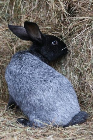 Кролики на мясо и живьём