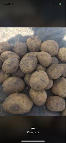 Картошка. Картофель. Картоп. Potatoes. Картофель фри. Чипсы.