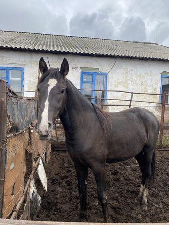 Продам жирных лошадей, крс жирные, телята подсосные 10 голов