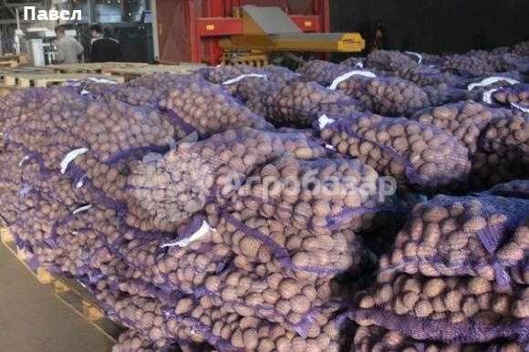 Картошка оптом продажа
