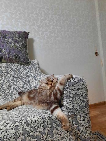 Кот для скрещивания