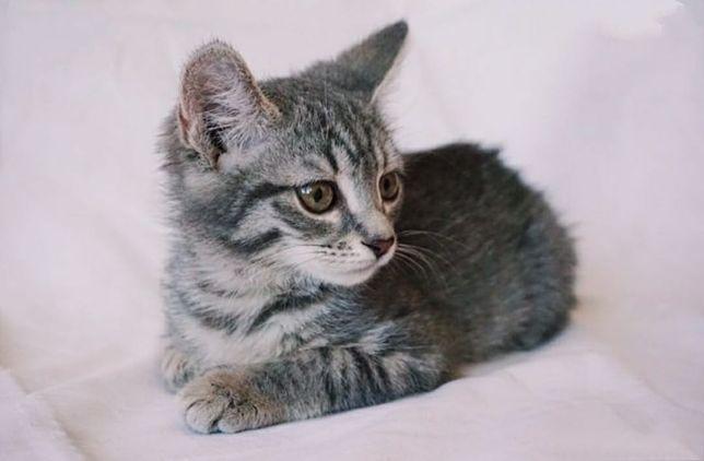 Кот. Мысық. Кошка