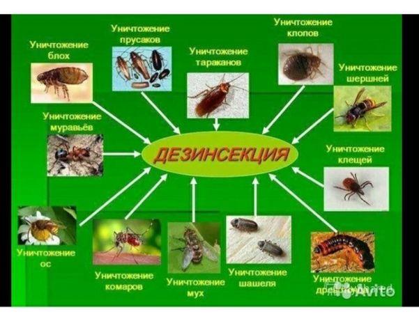 Дезинфекция любых насекомых