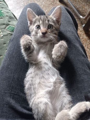 Котят-мальчики бесплатно