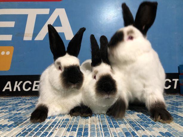 Продам кроликов калифорния клетки