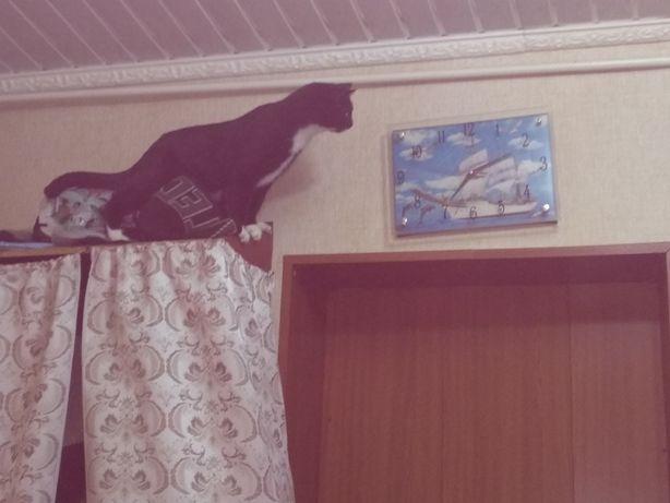 Потерялся котик.
