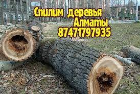 Спилим деревья Алматы. Спил деревьев. Спилить дерево. Обрезка.