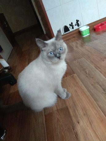 Шикарная кошка Моника! С доставкой!