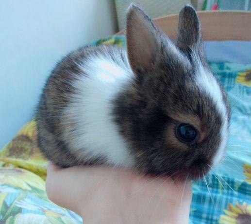 Мини кролик девочка