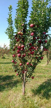 Продам яблоки с сада