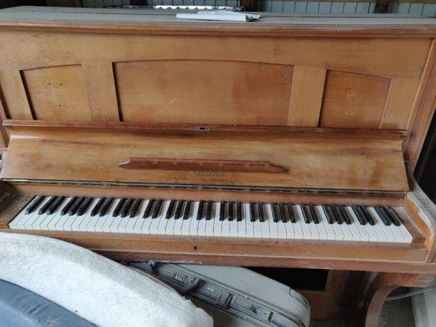 Pianina Krauss, E. Stuttgart