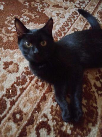 Отдам котенка девочку  2 месяца