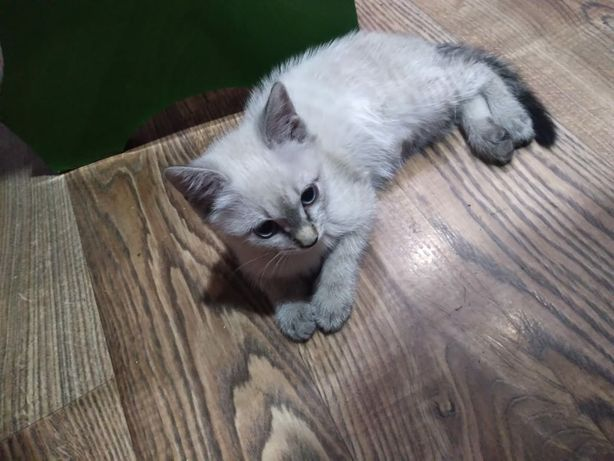 Отдам котенка девочку. 3 месяца