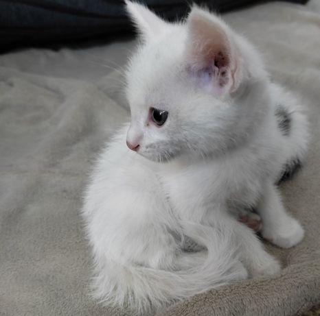 Отдам котят даром доброму человеку