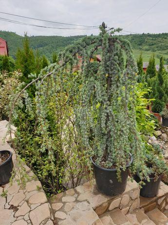 Plante ornamentale, (Specialități)