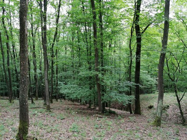 Pădure accesibila