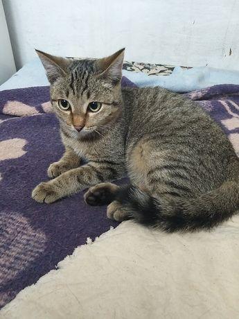 Кастрированый котик и стерилизованная кошечка ищет дом