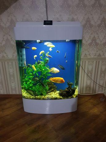 Продам  аквариум заводское  600л