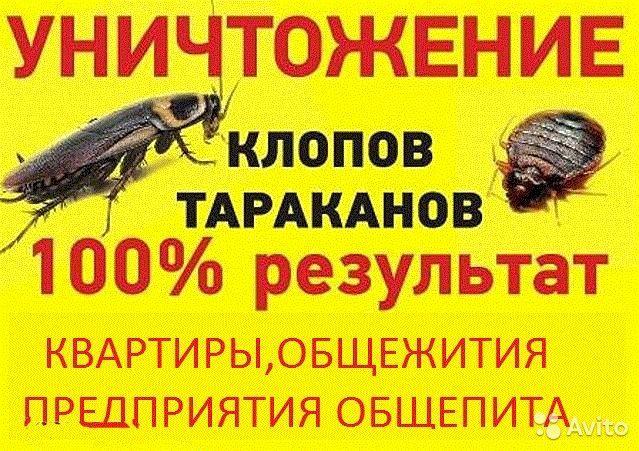 Уничтожение Клопов, Тараканы, Блохи, Комары и Всех видов Насекомых !