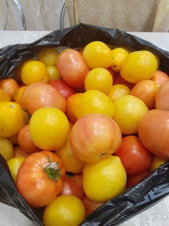 Продам помидоры дачные