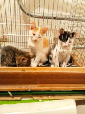 Котята ищут дом маленький