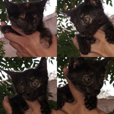 Котята в хорошие в руки