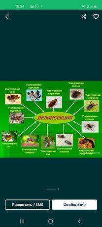 Дезинфекция обработка квартир от насекомых