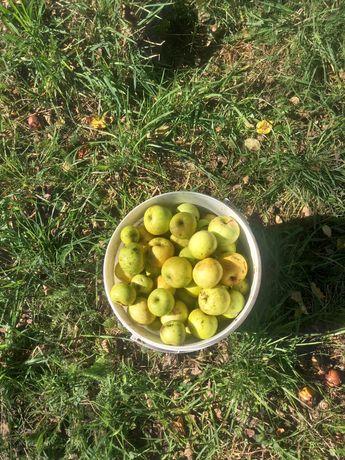 Vand mere pentru suc si tuica