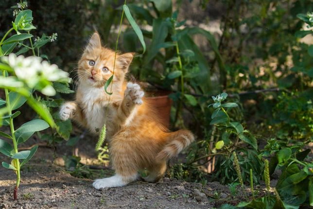 Котята - Мощные лапища