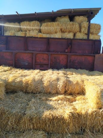 Салома пшеничная продается тюк 650 с поля жанбылская область с юбелейн