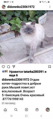 Подарю котейку