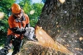 Пилим деревья дёшево