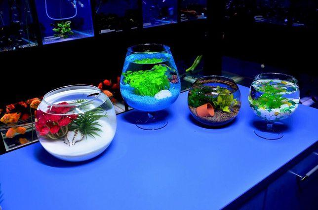 """Круглые аквариумы в зоомагазинах """"Живой Уголок"""""""