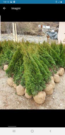 Amenajarea grădini cu plante Ornamentale