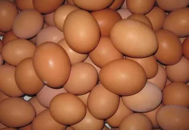 Ломан Браун - инкубационные яйца.