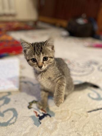 Кошка. Отдам за хорошие руки