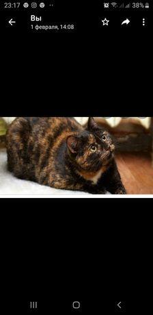 Кошки ищют дом все привиты стерильны