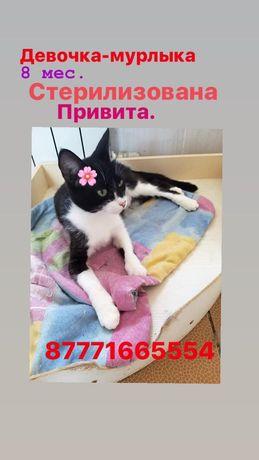 Кошка  Мышелов стерилизована