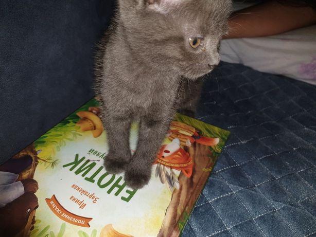 Котёнок для ласки