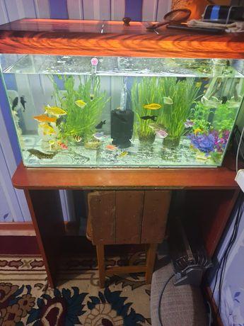 Продаю аквариумы или обмен