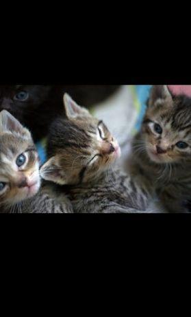 Отдам бесплатно кошки маленькие