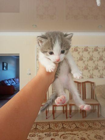 Продаётся котёнок