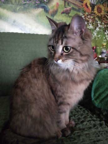 Очень красивая сибирская девочка 5м, зеленоглазая, ищет лучшую семью