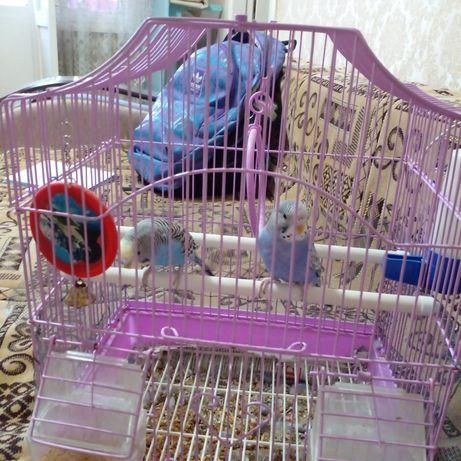 Продаю попугая 10.000