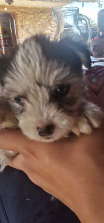 ofer câini spre adopție in tg jiu