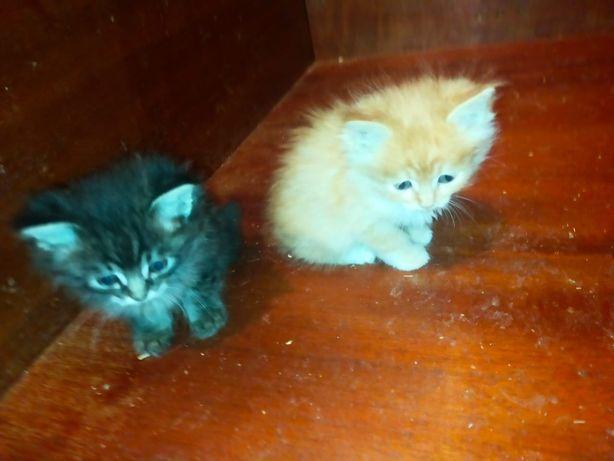 Солнечные котята мальчики!