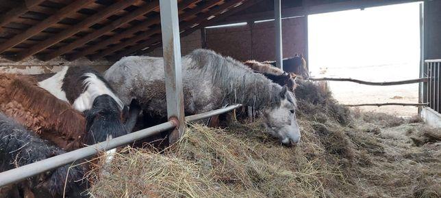 Продам лошадей в Баянаульском районе