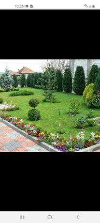 Amenajăm grădini plante ornametale
